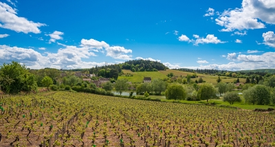 Vineyards in Burgundy