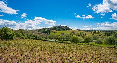 Vineyards in Burgundy