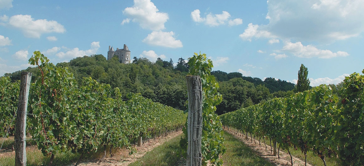 Vineyards of Buzet, Aquitaine